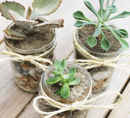 DIY mason jar succulents are incredibly easy to make. All you need is a few simple supplies, and you too can have a beautiful arrangement.