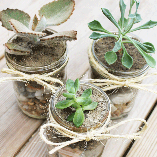 How to Create Your Own DIY Mason Jar Succulents
