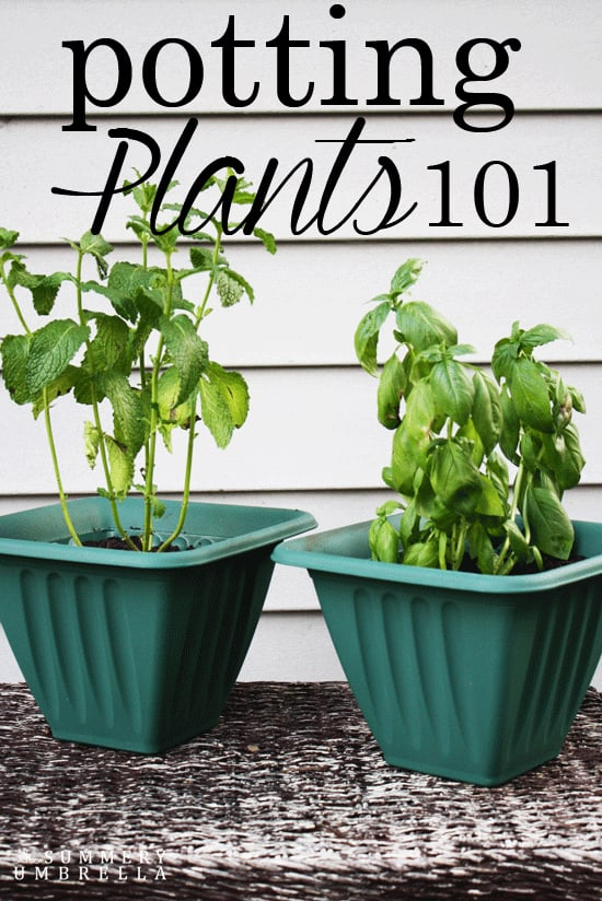 potting plants 101