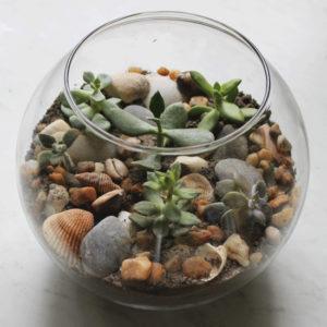 How to Create a Succulent Terrarium