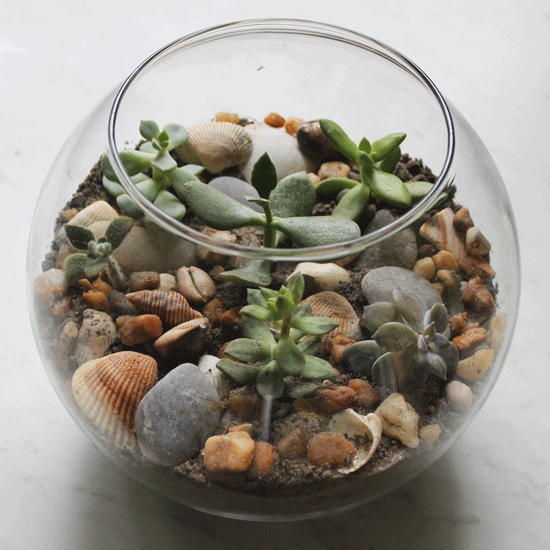 How to Create a Succulent Terrarium