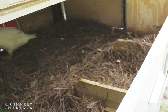 making a chicken coop