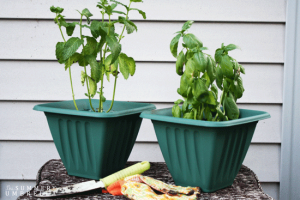 Potting Plants 101