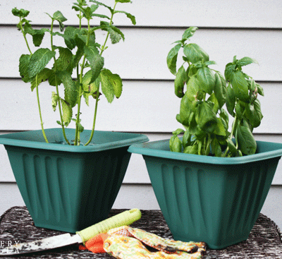 Potting Plants 101: Learn How with Easy Steps