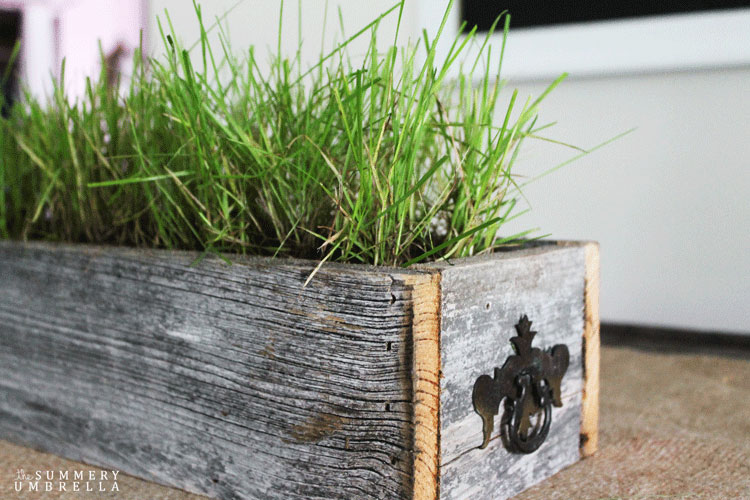 Create a simple summery centerpiece with grass!