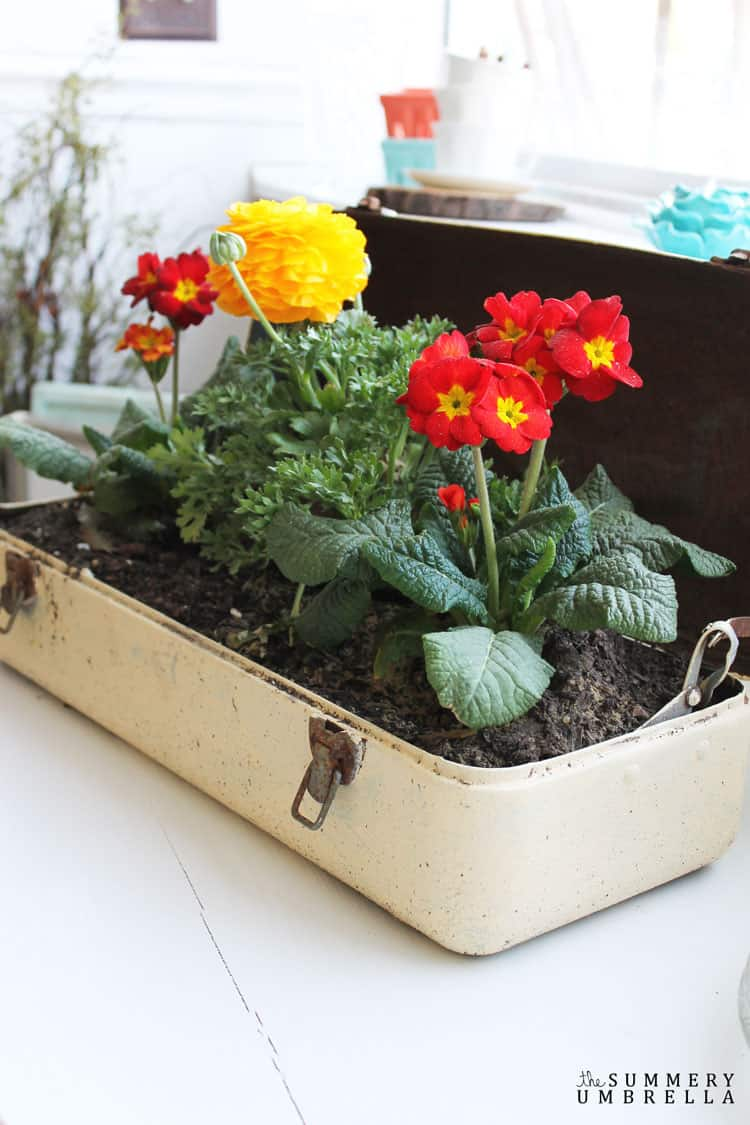 Create an interesting and beautiful flower planter using an old repurposed toolbox! Not sure how? Let me show you in today's tutorial NOW!