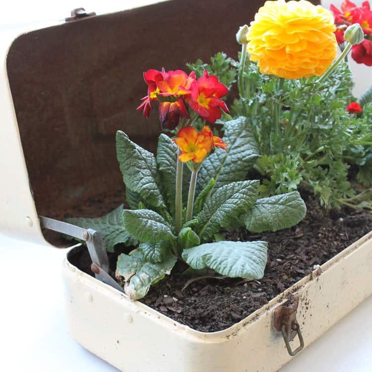 Repurposed Toolbox Flower Planter
