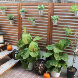 6 Cool Ideas for Wall Planters
