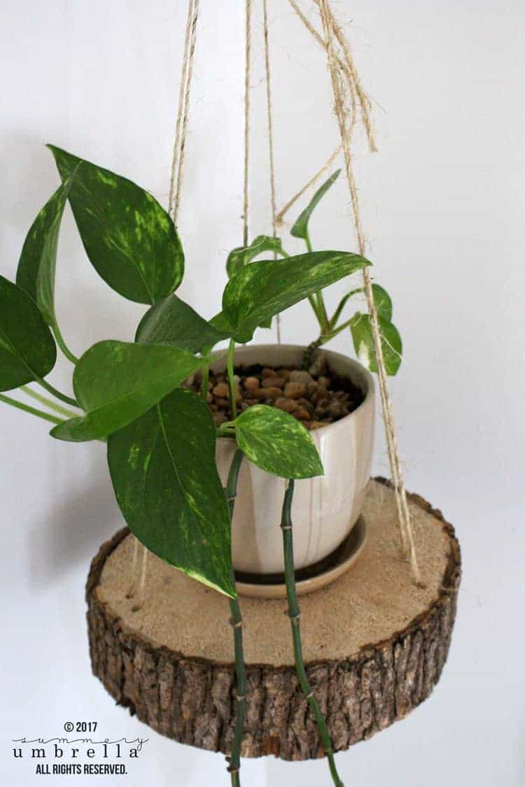 Easy Diy Hanging Planter Using A Wood Slice And Rope The