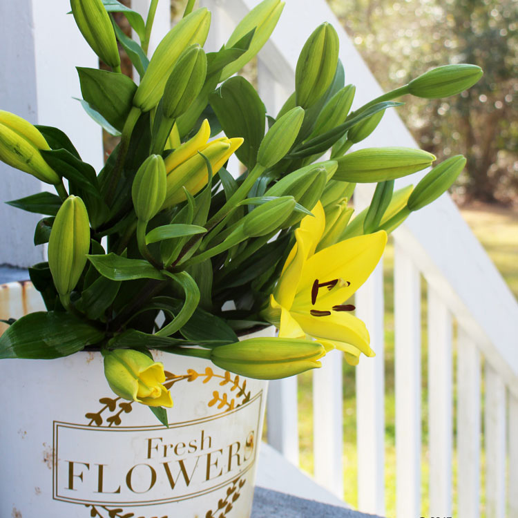 Free Vintage Inspired DIY Vinyl Decal for a Flower Pot