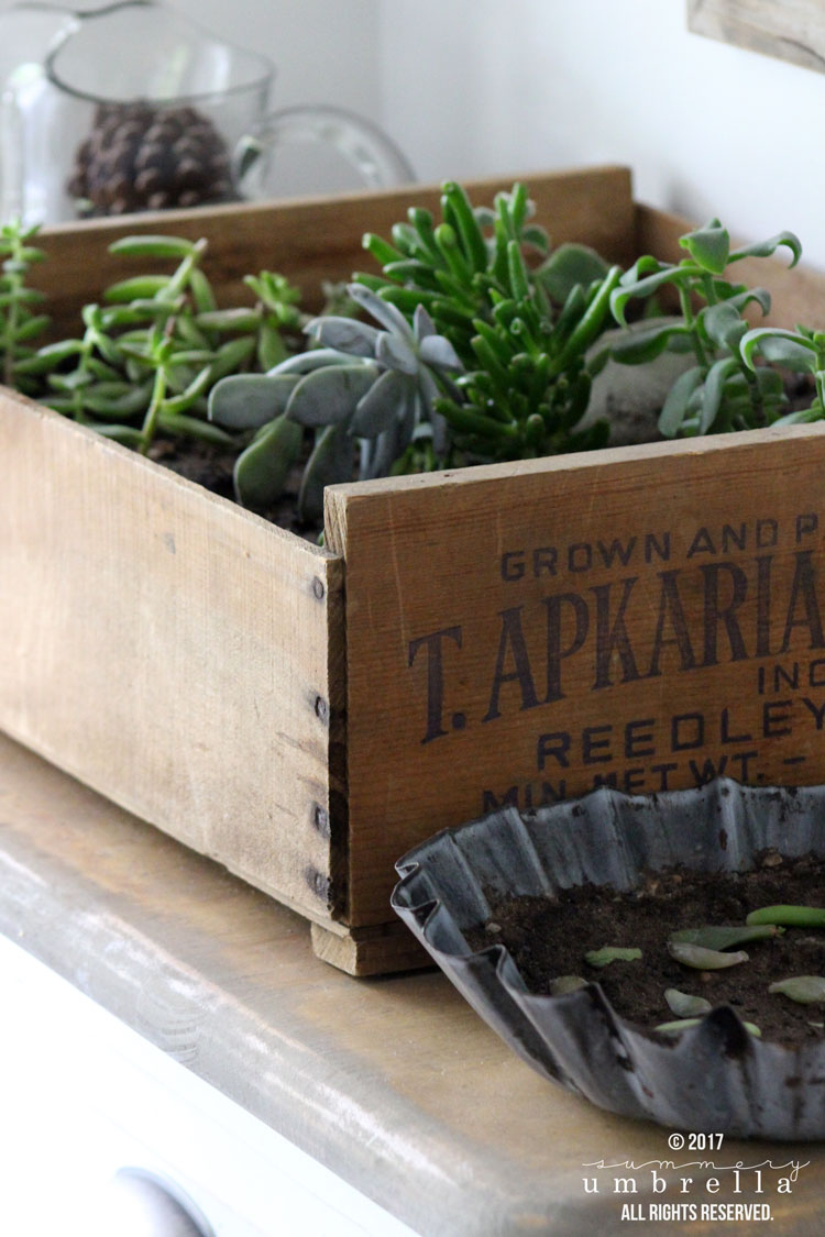 Believe it or not, a DIY Vintage Crate Succulent Garden is not only incredibly gorgeous, but also easy to make. Plus, only a few supplies are needed!