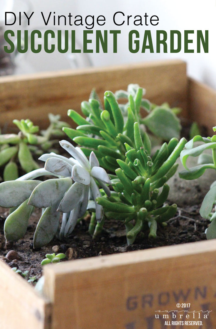 Learn how to create a succulent terrarium in just a few simple steps. You'll definitely be pleasantly surprised how easy it really is!