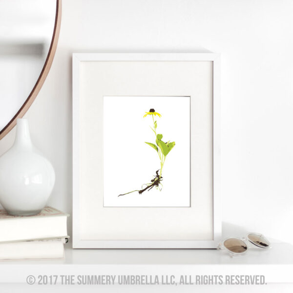 black eyed susan printable
