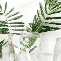 Decorating with Indoor Plants