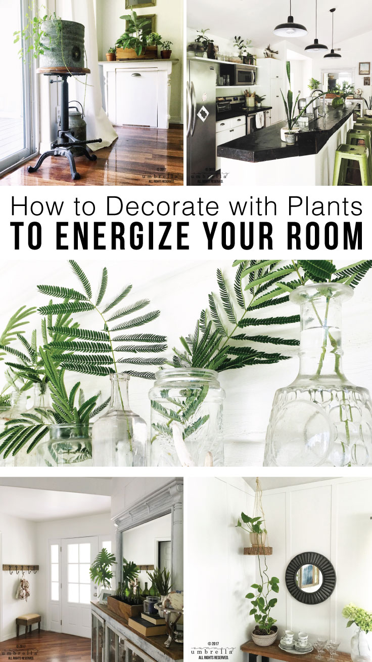 How to decorate with plants indoors to energize your room for How to decorate