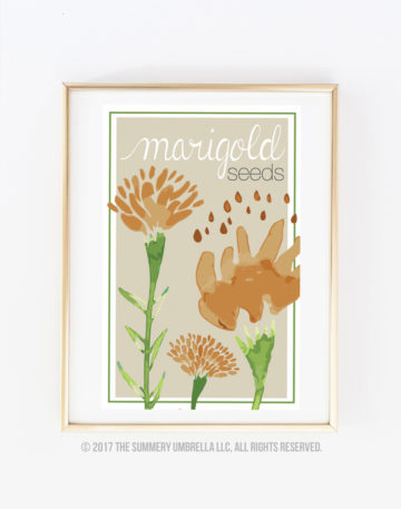 diy seed packet marigold