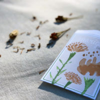 seed packet marigold