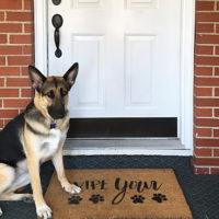 Wipe Your Paws Painted Coir Doormat by The Birch Cottage