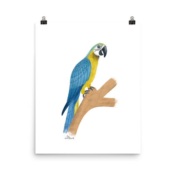 blue and gold parrot art print