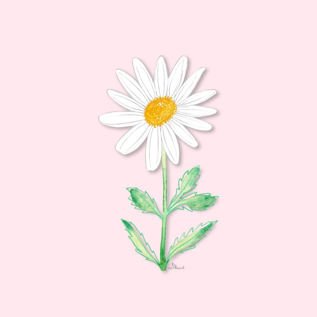 white daisy illustration