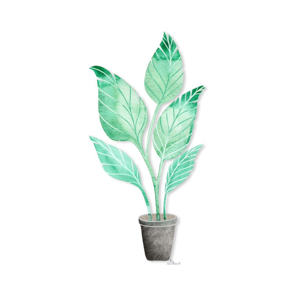 potted palm illustration