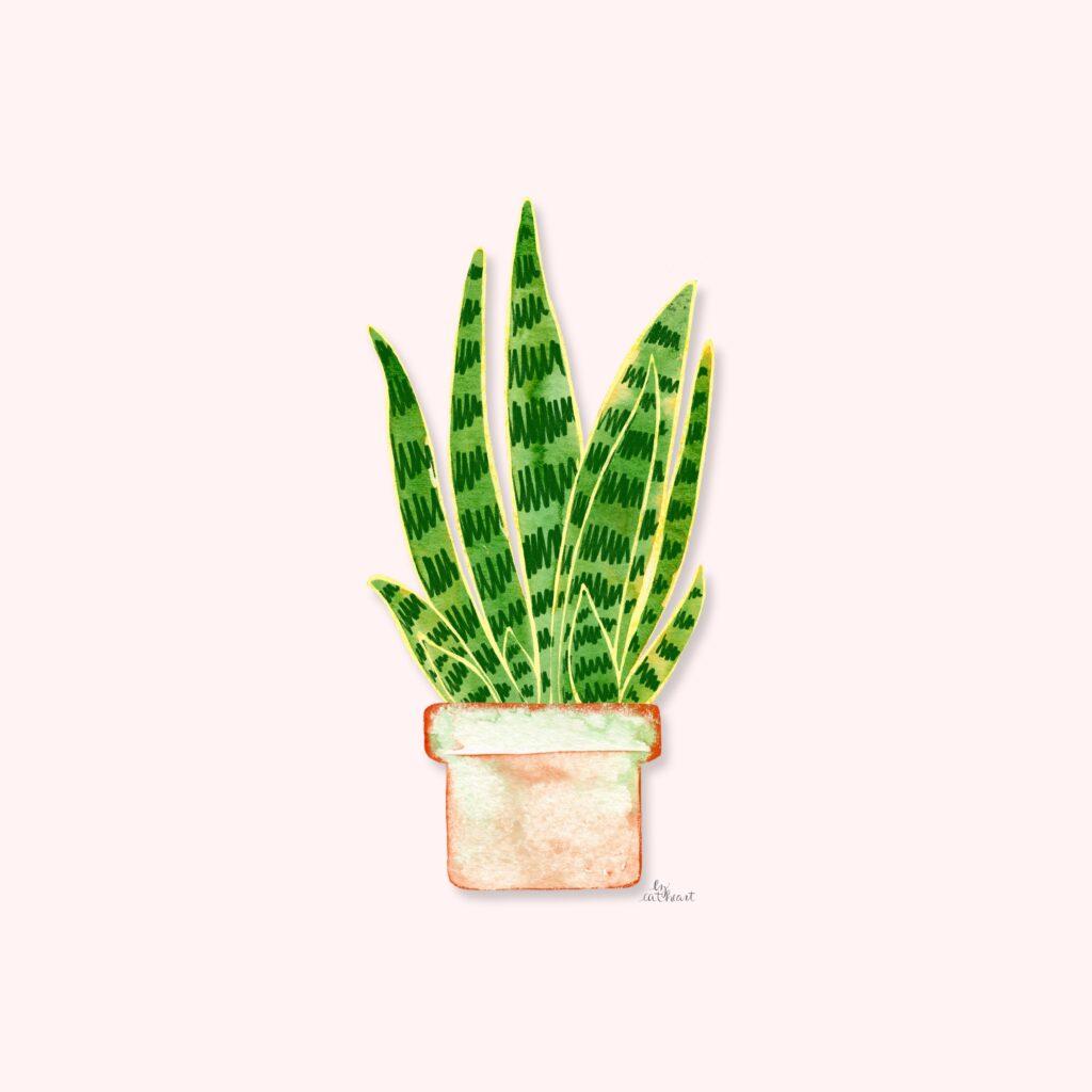snake plant illustration