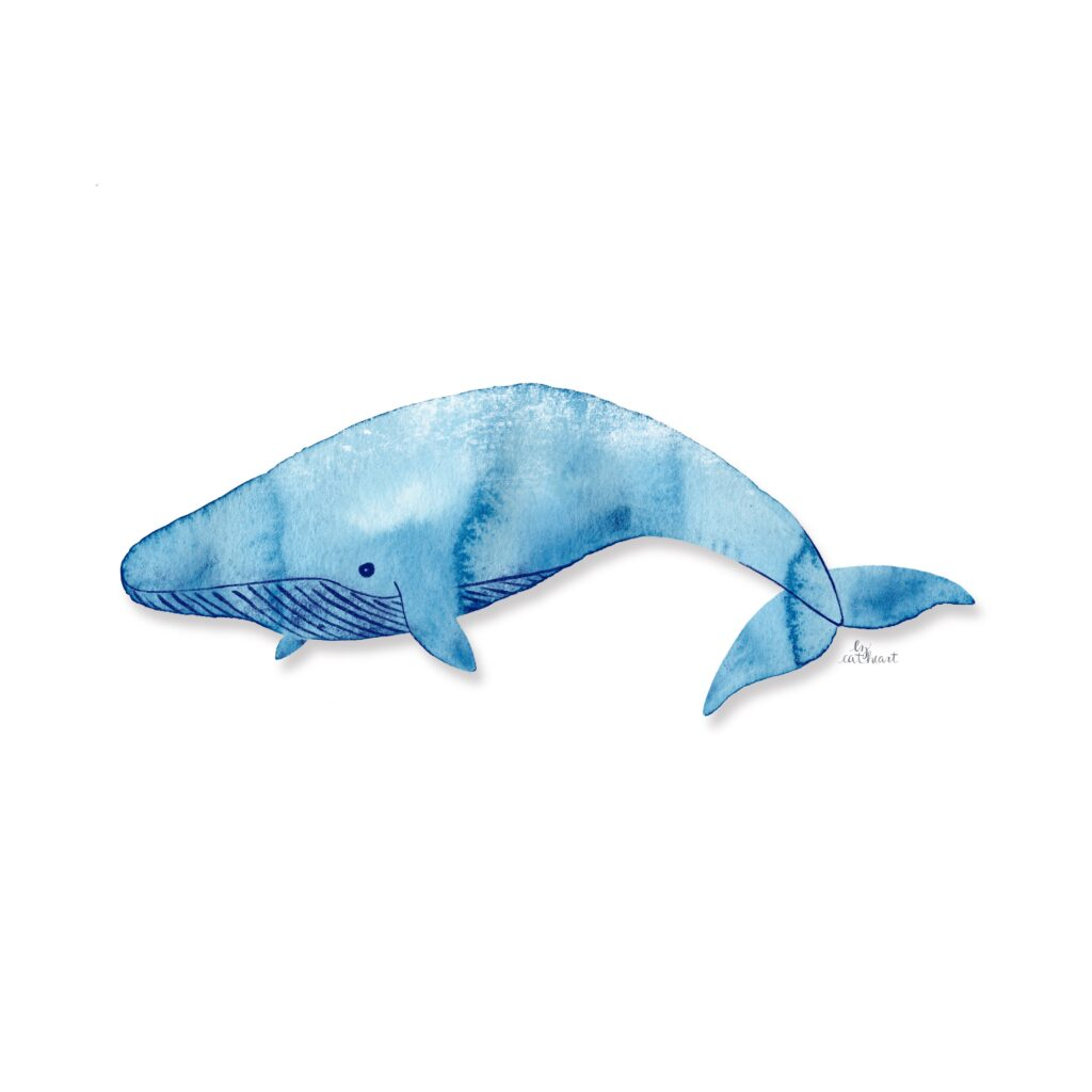 blue whale illustration