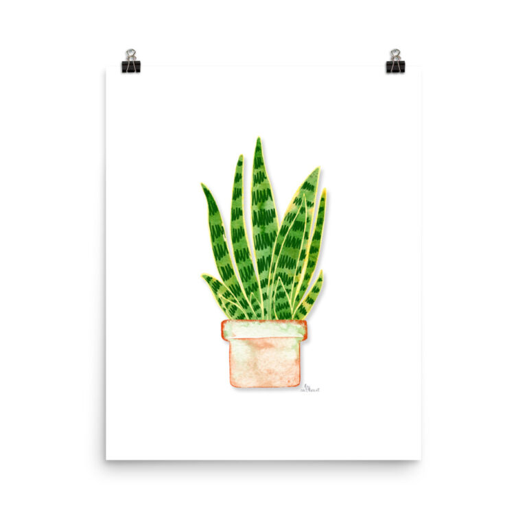 potted snake plant print